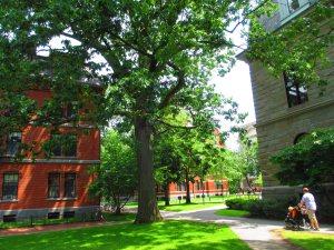 Part of the Harvard Yard