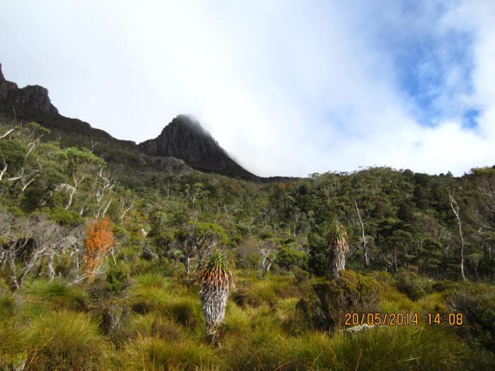 Beautiful wild vegetation on the mountain