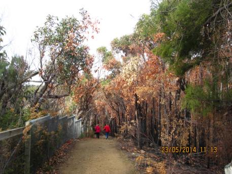 """Love this pic of the couple in red walking on the """"autumn-filled"""" track"""