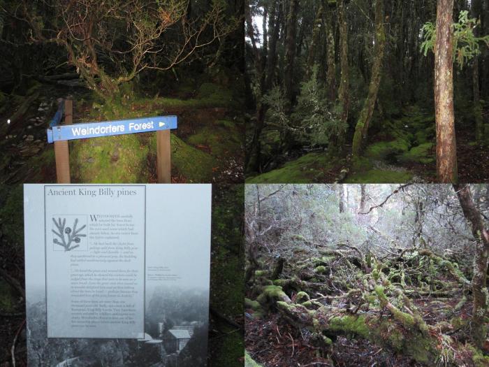 Weindorfer Forest
