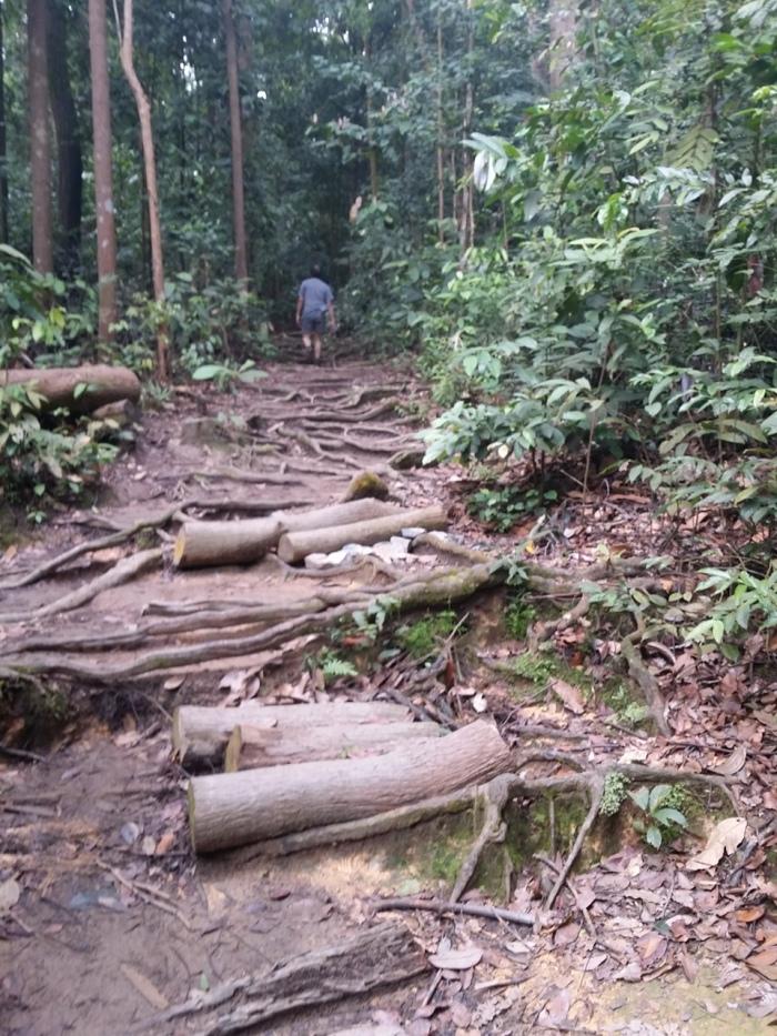 A peek into the Jungle Path trail