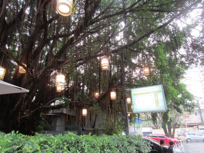 Banyan tree with lights outside Audrey, adding to its charm