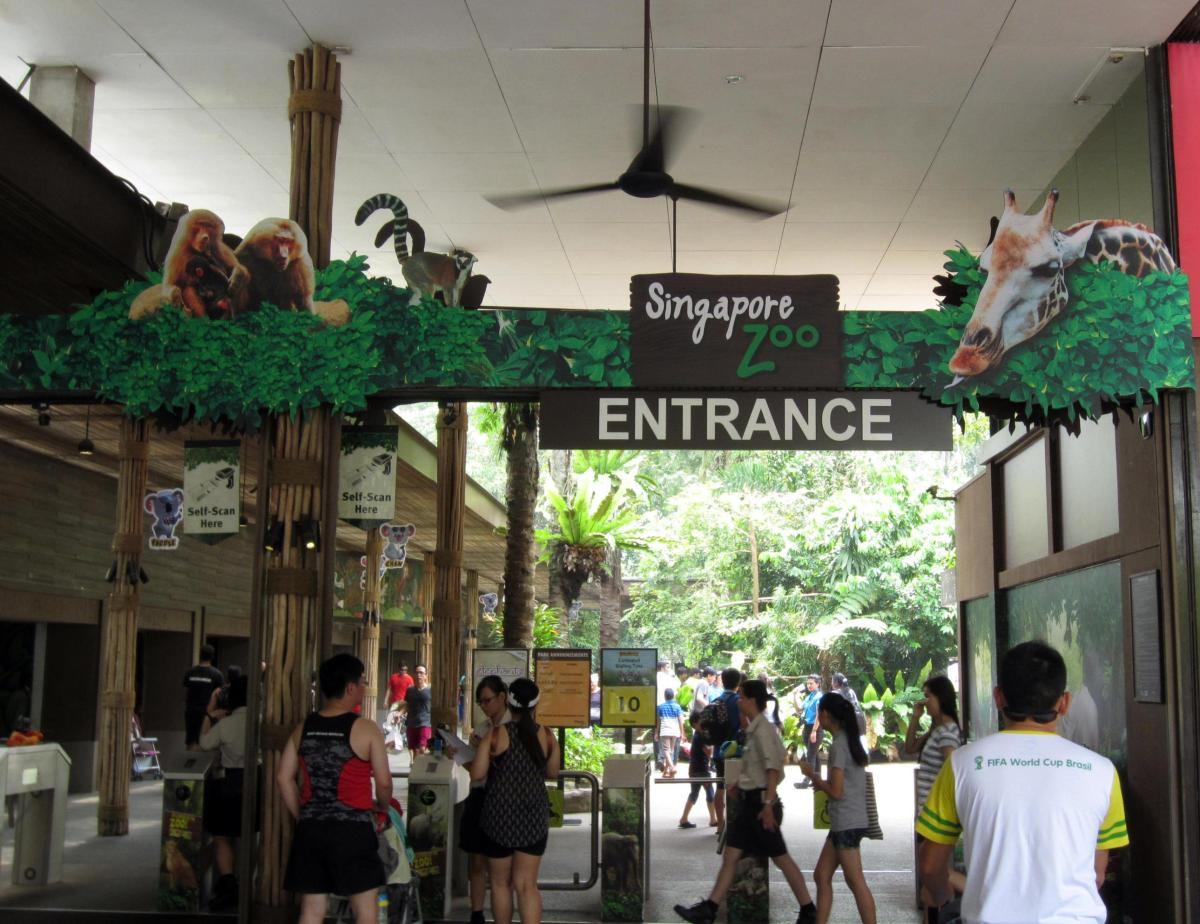Singapore Zoo - an enriching sleep-with-the-beasts staycation in a rainforest zoo