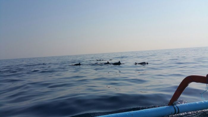 Our first sighting of a school of Dolphins!