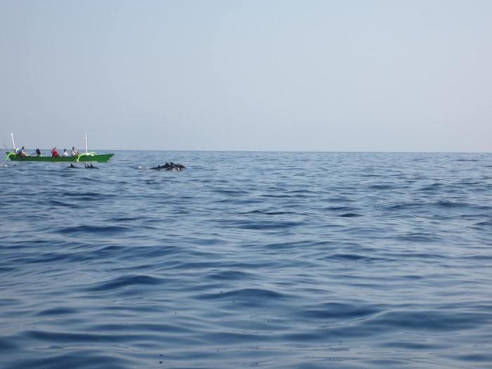 I envy the folks on that boat. The school of Dolphins were swimming alongside with them!