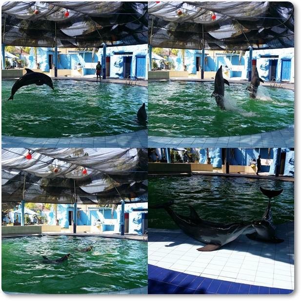 Melka dolphins