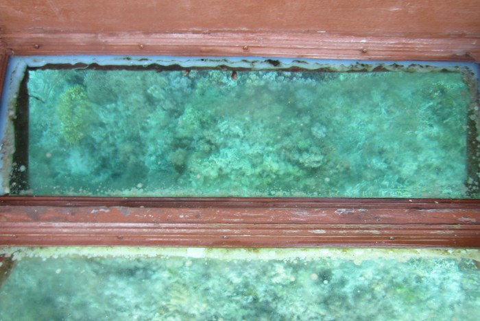 This was 1 of the clearer pic of corals I managed to capture