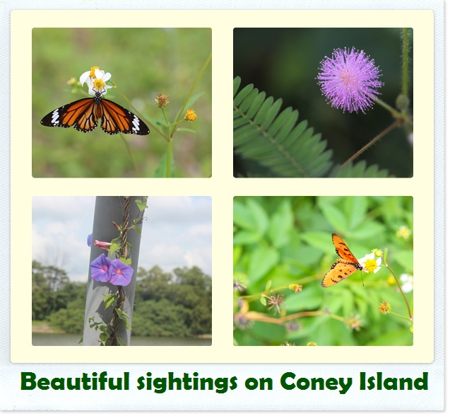The colourful fauna & flora in the park