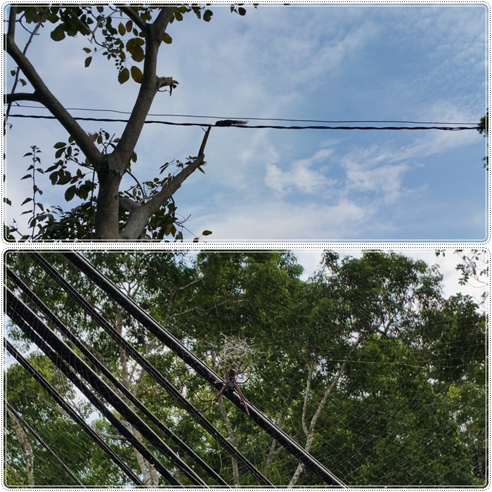 Finally saw the squirrel (top pic) & giant spider (bottom pic)!