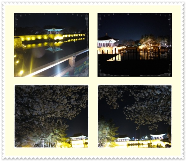 Wonderful reflections at night with awesome cherry blossom