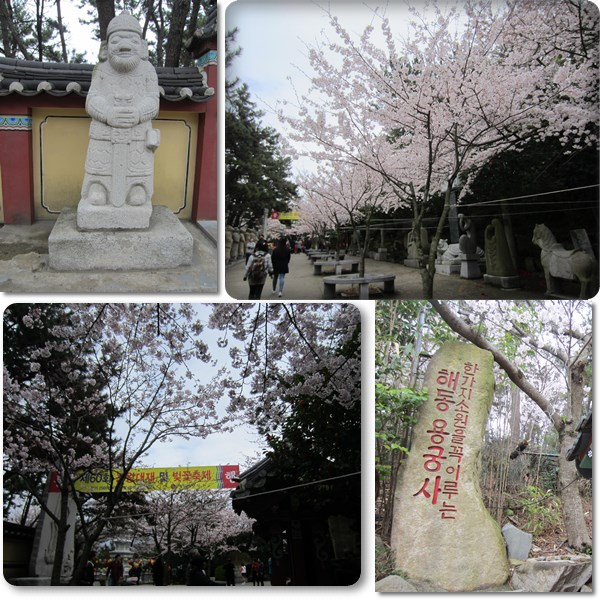It's the Cherry Blossom Festival at Haedong Yonggungsa! :)