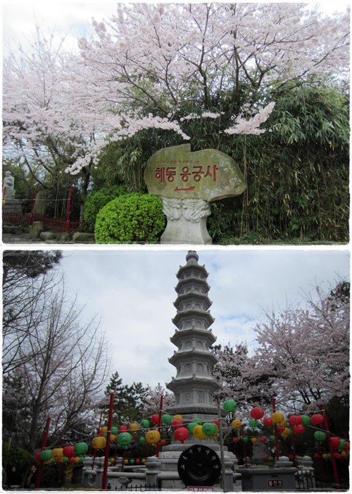 Surrounded by blooming cherry trees at the pagoda & temple signage