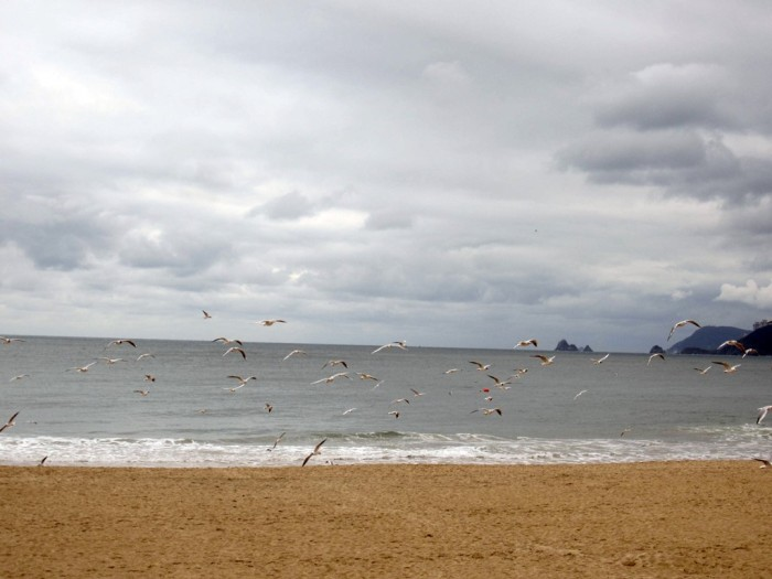 Plenty of seagulls on the beach