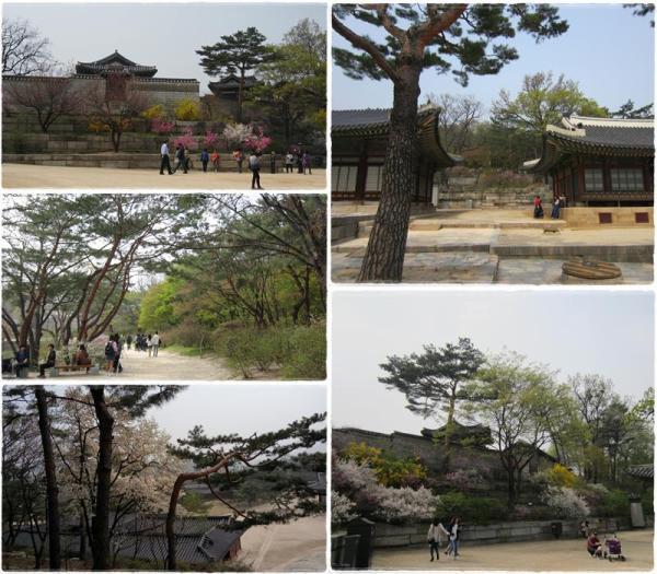 Vast spaces between halls planted with towering trees