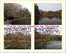palace-cherry-blossom